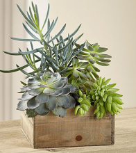 Stylish Succulents