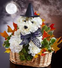 Witchy Pooch