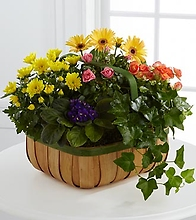 The Gentle Blossoms Basket